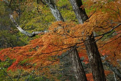 AZUMINO_20111017_5.JPG