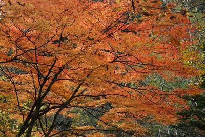 AZUMINO_20111017_6.JPG