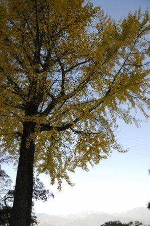AZUMINO_20111027_4.JPG