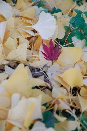 AZUMINO_20111027_9.JPG