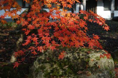 AZUMINO_20111104_4.JPG