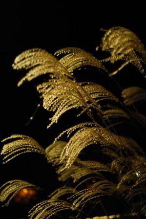 AZUMINO_20111115_13.JPG