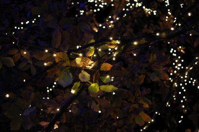 AZUMINO_20111115_16.JPG