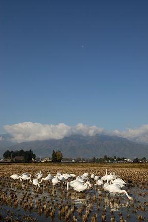 AZUMINO_20111117_6.JPG