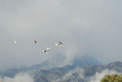 AZUMINO_20111121_6.JPG