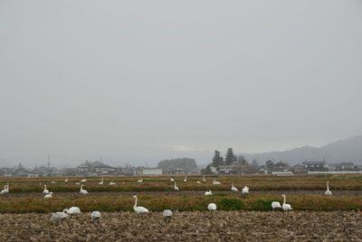 AZUMINO_20111202_3.JPG