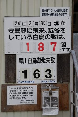 AZUMINO_20120330_1.JPG