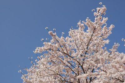 AZUMINO_20120424_10.JPG