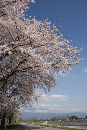 AZUMINO_20120424_11.JPG