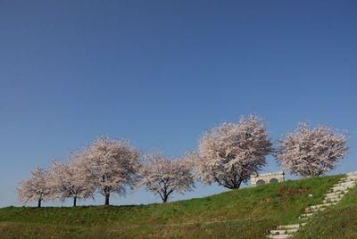 AZUMINO_20120424_6.JPG