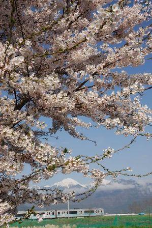 AZUMINO_20120424_7.JPG