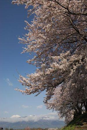 AZUMINO_20120424_8.JPG