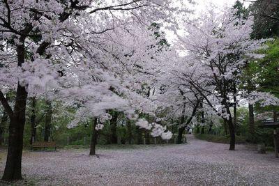 AZUMINO_20120425_11.JPG