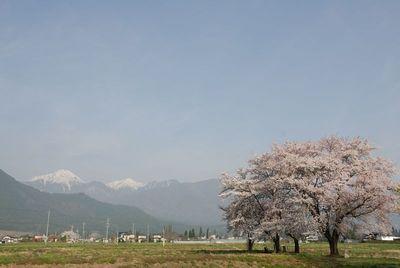 AZUMINO_20120425_5.JPG