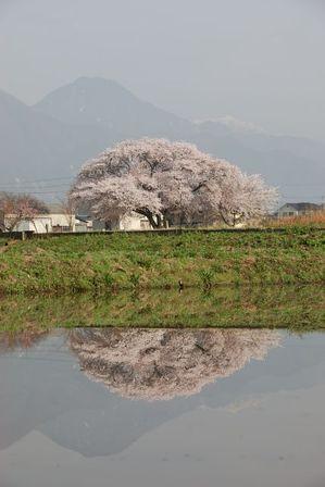 AZUMINO_20120425_6.JPG