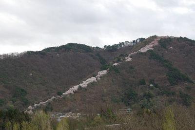 AZUMINO_20120426_1.JPG