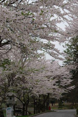 AZUMINO_20120430_3.JPG