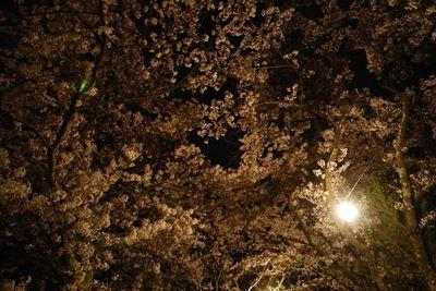 AZUMINO_20120501_12.JPG