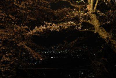 AZUMINO_20120501_4.JPG