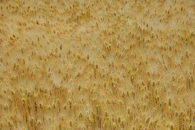 AZUMINO_20120604_1.JPG