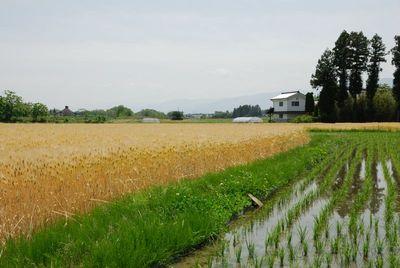 AZUMINO_20120604_3.JPG