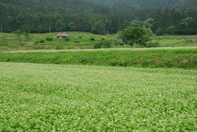 AZUMINO_20120628_5.JPG