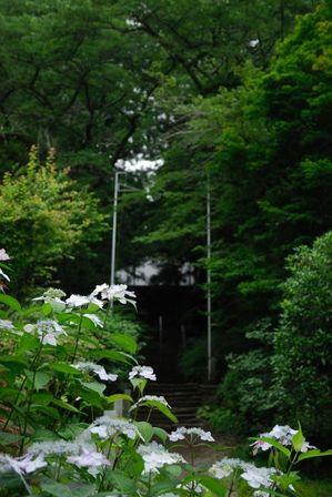 AZUMINO_20120707_1.JPG