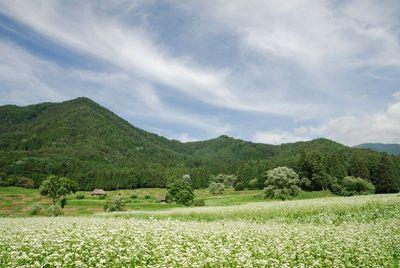 AZUMINO_20120711_5.JPG