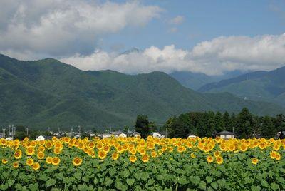 AZUMINO_20120809_1.JPG