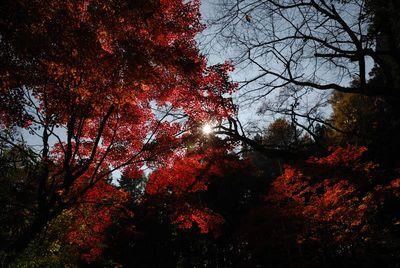 AZUMINO_20121110_14.JPG