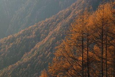 AZUMINO_20121113_4.JPG
