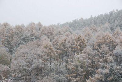 AZUMINO_20121115_1.JPG