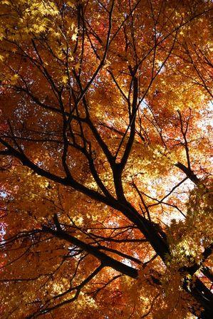 AZUMINO_20121116_12.JPG