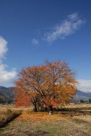AZUMINO_20121116_5.JPG
