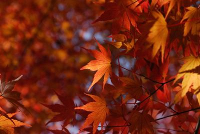 AZUMINO_20121124_7.JPG