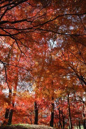 AZUMINO_20121124_8.JPG