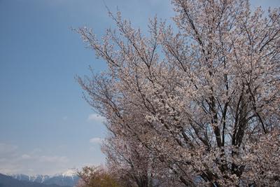AZUMINO_20130429_7.jpg
