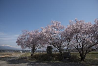AZUMINO_20140415_04.JPG