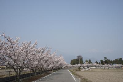 AZUMINO_20140417_02.JPG