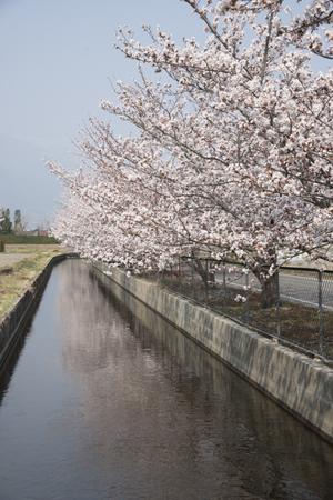 AZUMINO_20140417_03.JPG
