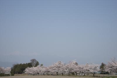AZUMINO_20140417_04.JPG