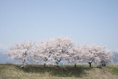 AZUMINO_20140419_01.JPG