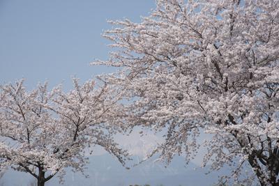 AZUMINO_20140419_02.JPG