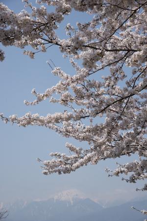 AZUMINO_20140419_07.JPG