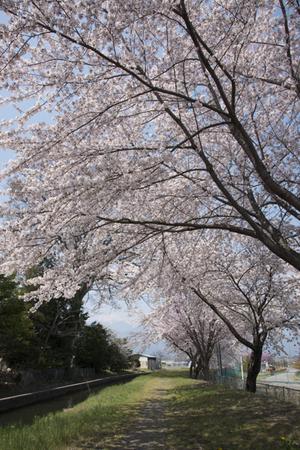 AZUMINO_20140419_08.JPG