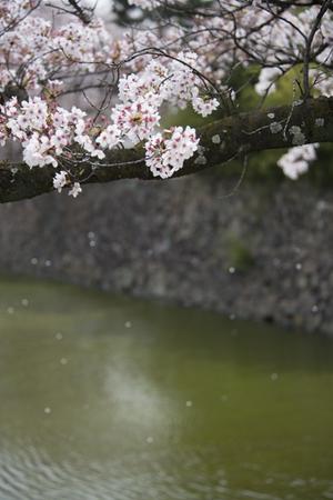 AZUMINO_20140419_23.JPG