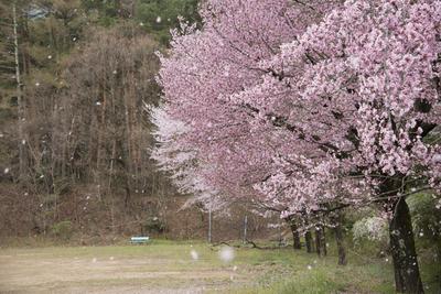 AZUMINO_20140422_02.JPG