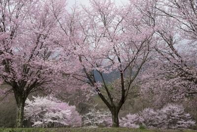 AZUMINO_20140422_03.JPG