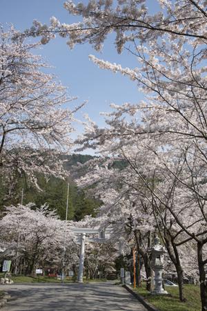 AZUMINO_20140425_01.JPG