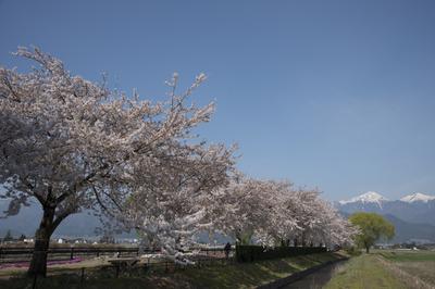 AZUMINO_20140425_04.JPG